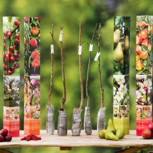 5x-fruitboom-93-cm